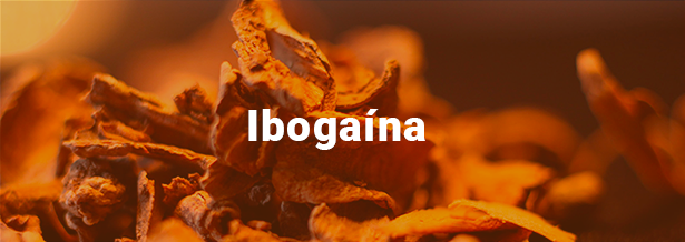 ibogaina-terapia-alternativa